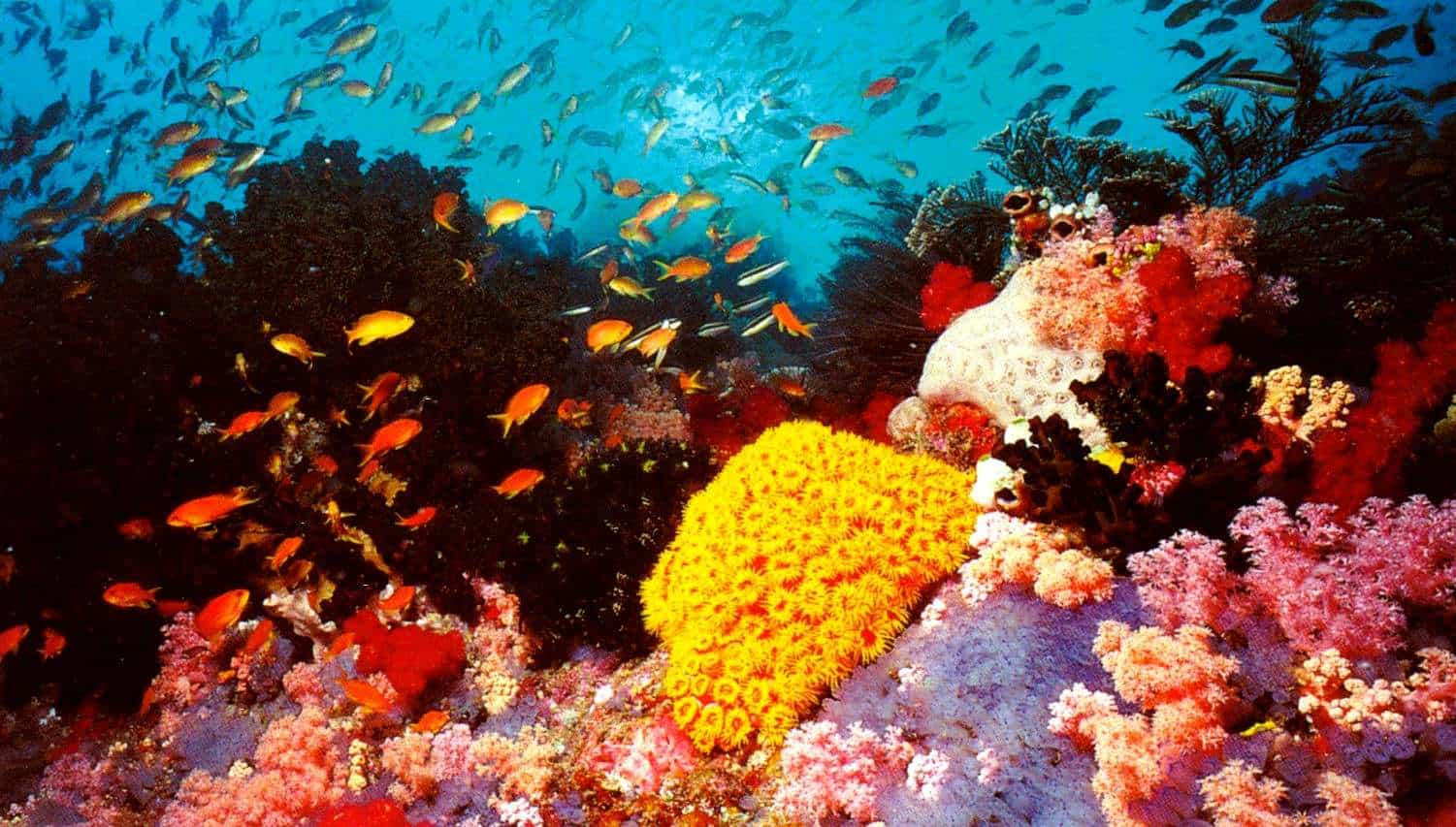 great-barrier-reef-korali