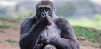 Примати