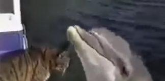 Котка играе с делфин
