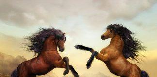 Красиви коне на задни крака