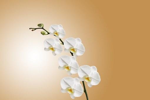 Как да поливаме орхидеите?