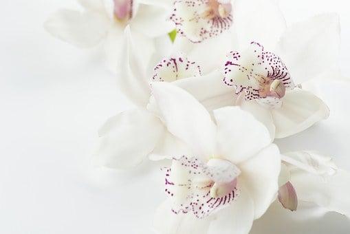 Гледане на орхидеи