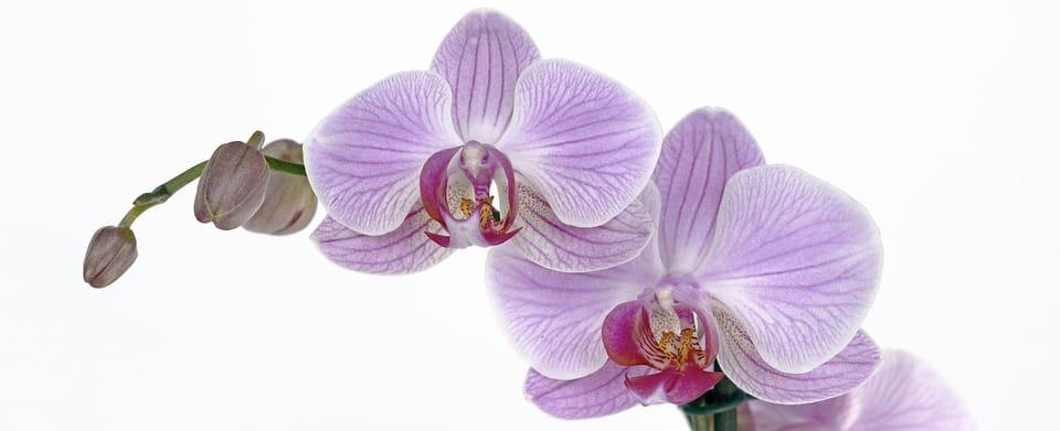 Грижа за орхидеите