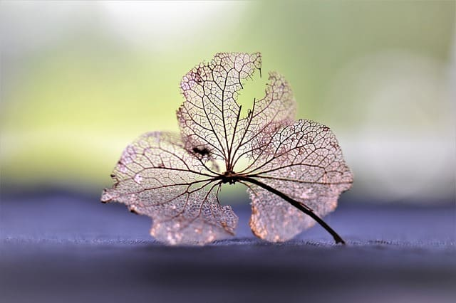 Хербаризирано цвете